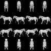 horse-white